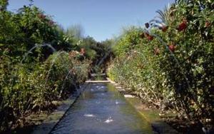 mandelplantage